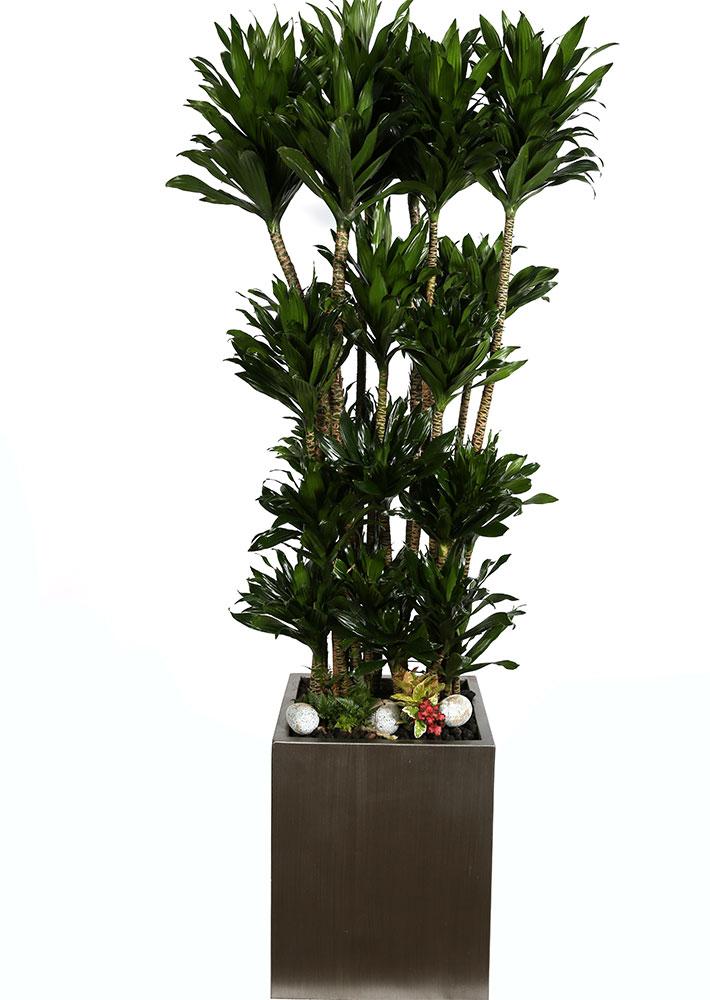 콤펙타 VIP 실내인테리어식물
