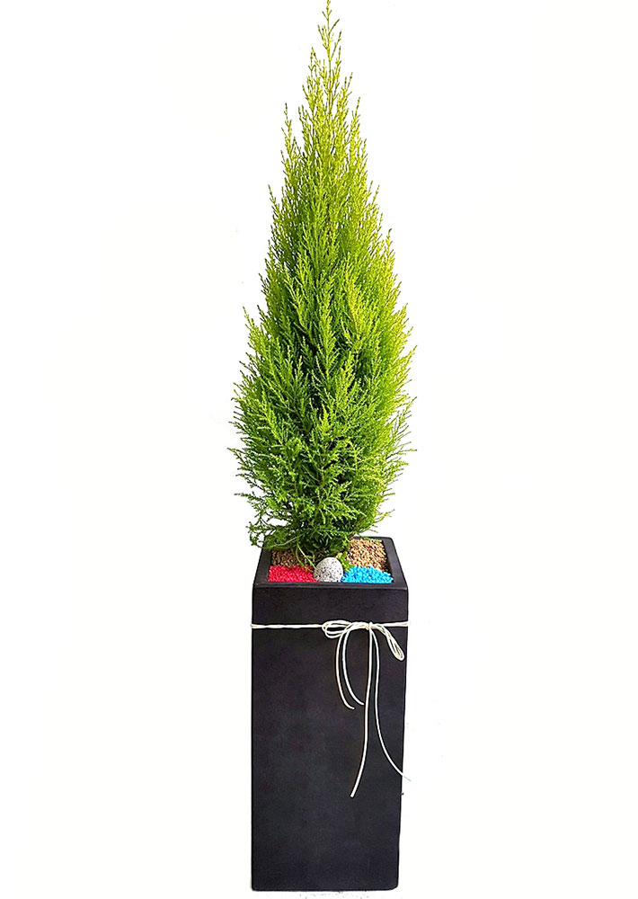 율마-사각 까페개업선물
